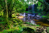 beautiful tropical rainforest and stream in deep forest, Phu Kradueng National Park, Thailand - 174898802