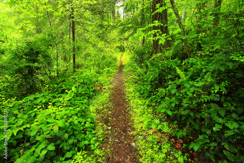 Keuken foto achterwand Lime groen a picture of an Pacific Northwest forest trail