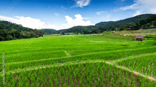 Foto op Aluminium Rijstvelden rice fields on terraced , rice plantations , Chiangmai province , North of thailand