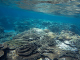 Coral reef formation on Lady Elliot island in Queensland Australia