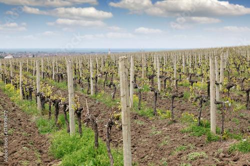 Aluminium Wijngaard Vineyard landscape agriculture