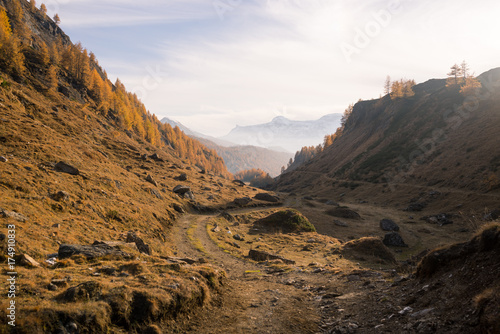 Fotobehang Grijze traf. Scenics misty mountain fall landscape with dirt road in the middle in larches forest in sunny autumn day outdoor.