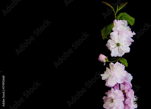 Spring sakura blossom Poster