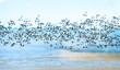 Leinwanddruck Bild - Freiheit, Traum vom Fliegen, Möwenflug, Möwenschwarm über der Nordsee :)