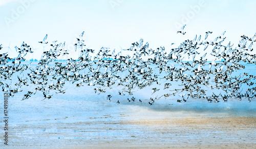 Leinwanddruck Bild Freiheit, Traum vom Fliegen, Möwenflug, Möwenschwarm über der Nordsee :)