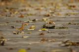 木道に落ち葉 - 174920077