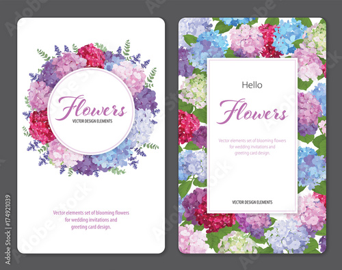 Colorful hydrangea flower and lavender on white background. Vector set of blooming floral for wedding invitations and greeting card design.