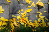 Yellow Fallen Autumn Leaves on the on the Sidewalk Paved with Gray Concrete Paving Stones and Grass Lawn Top View. Autumn Approach, Season Change Concept - 174927674