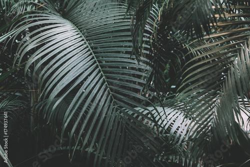 Palm garden background - 174937641