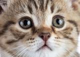 cat kitten closeup