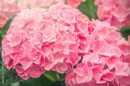 Aluminium Gerbera Flowers