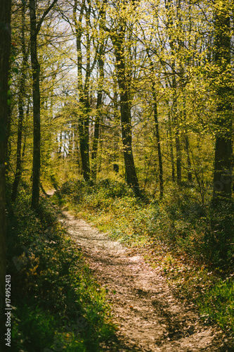 Foto op Canvas Weg in bos Un chemin à travers une forêt en Europe