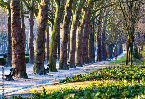 Deurstickers Brussel Picturesque alley in Elisabeth park at sunset, Brussels, Belgium