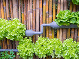 vertical vegetable farm on the wall - 174967058