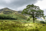View of the area around Crummock Water, Lake District UK - 174967204