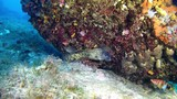 Scuba diving - Moray eel in a reef - 174972416