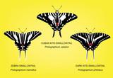 Butterfly Swallowtail Set Vector Illustration - 174973475