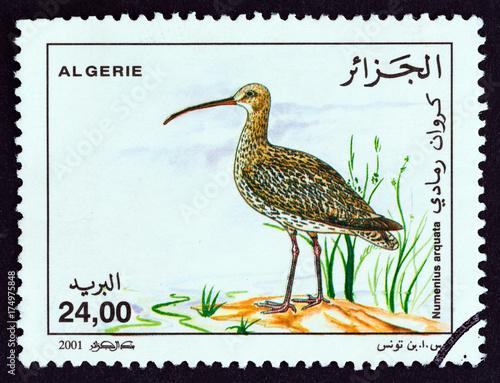 Poster Eurasian curlew, Numenius arquata (Algeria 2001)