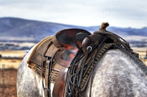 closeup of horse's saddle on white horse and mountains background