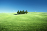 Group of cypresses and sunny day, Tuscany, Italy - 174980076