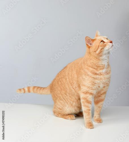 Cat © Kurhan
