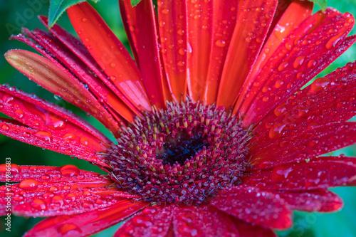 Aluminium Gerbera Red gerbera daisy