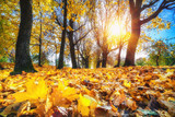 Bright foliage in sunny autumn park - 174989605