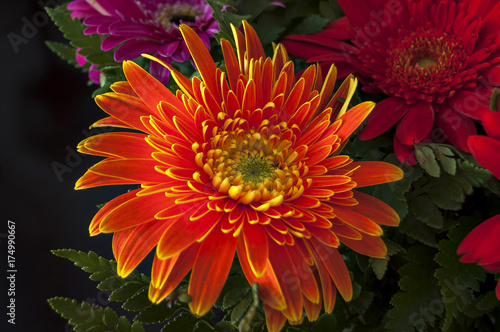 Tuinposter Zwart Big orange flower