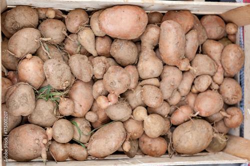 Patate raccolte  in una cassetta di legno