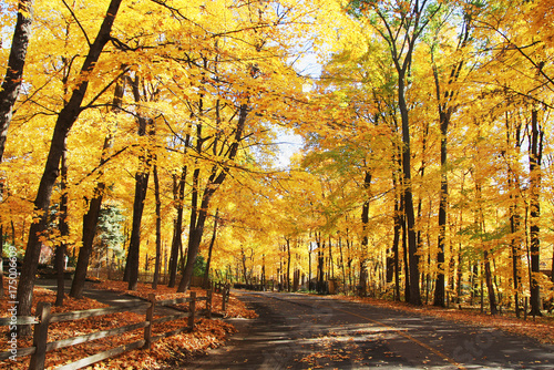 Papiers peints Miel Autumn nature background. Colors of the autumn at medwest USA. Fall landscape with a rural road across a golden woods. Horizontal shot.
