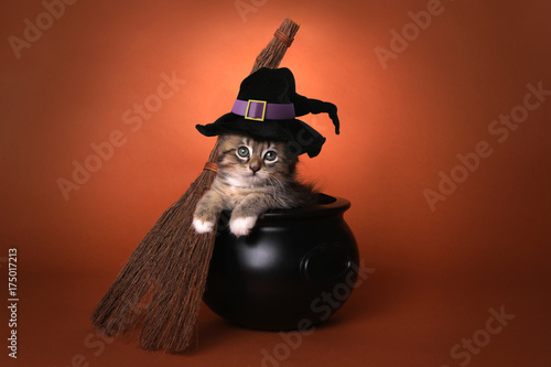 Cute Halloween Witch Themed Kitten Poster