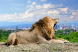 Lion with the city of on the background - 175020203