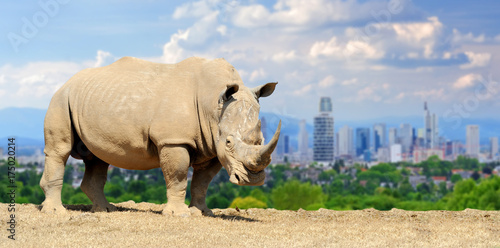 Fotobehang Neushoorn Rhino with the city of on the background