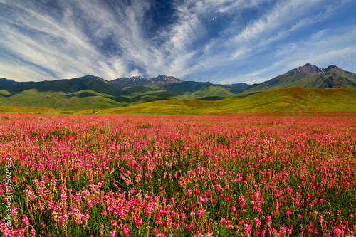 Aluminium Baksteen Field with flowers in mountain valley. Summer landscape during sunset