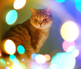 Cat and Christmas lights - 175027027