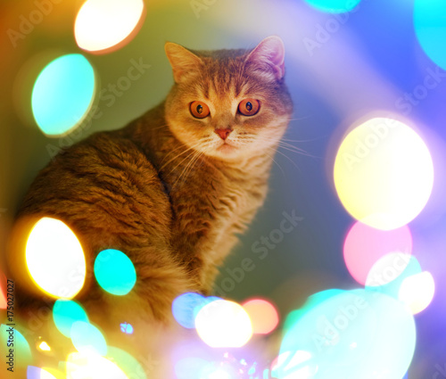 Aluminium Kat Cat and Christmas lights