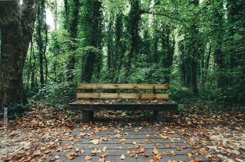 Keuken foto achterwand Weg in bos Pause