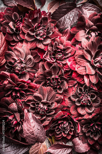 Beautiful creative red autumn flowers and leaves layout background. Floral fall pattern , top view