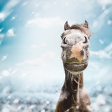 Funny horse face Muzzle  with nose at winter and snow nature background. - 175031601