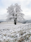 Frozen tree in winter with snow - 175033252