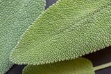 details of fresh sage leaves, close up - 175033459
