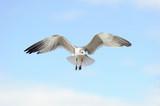 Seagull Flying - 175053006