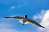 Bird - 175054691