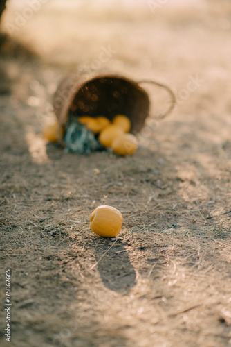 Papiers peints Beige Basket with lemons on the ground