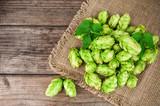 green, lush hop on napkin - 175067699