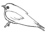 swallow symbol of springtime - 175078240