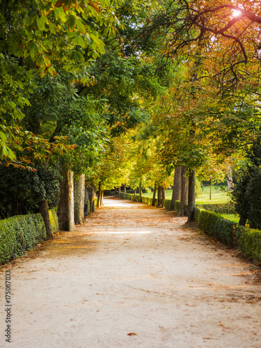 Tuinposter Herfst Autumn street in the city of Madrid.