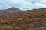 Fall colors in tundra in Denali National Park - 175099045