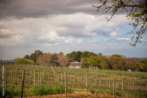 Deurstickers Wijngaard Vineyard near Cape Town