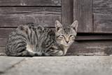 getigerte Katze liegt vor Holzwand